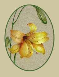 Yellow Day Lily Colored Pencil  Tutorial