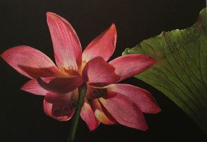 Waterlily Colored Pencil Tutorial